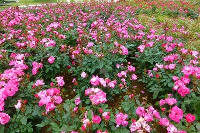ハウステンボスの庭園2.jpg